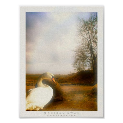 Cisne mágico posters