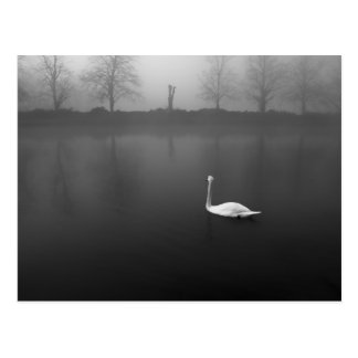 Cisne, mañana de niebla postal