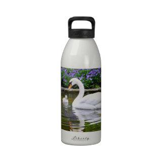 Cisne mudo con los polluelos en el agua botallas de agua