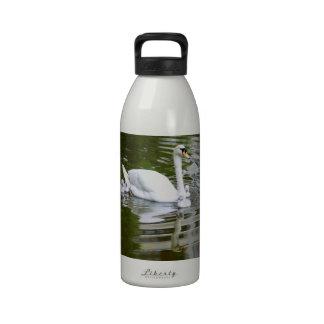 Cisne mudo con los polluelos en el agua botella de agua reutilizable