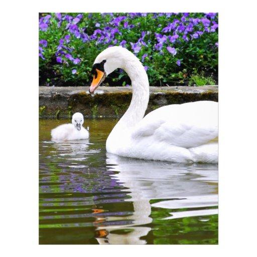 Cisne mudo con los polluelos en el agua plantilla de membrete
