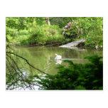 Cisne mudo (Cygnus Olor) por la pasarela Postales