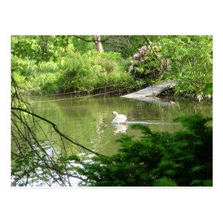 Cisne mudo (Cygnus Olor) por la pasarela Postal