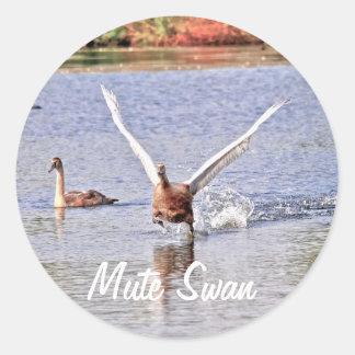 Cisne mudo del agua del Pájaro-amante salvaje de Pegatina Redonda