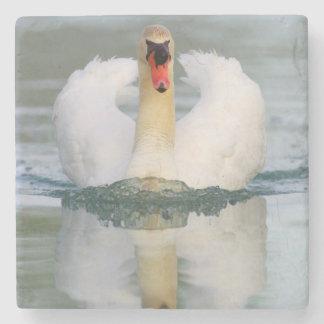 Cisne mudo en la charca posavasos de piedra