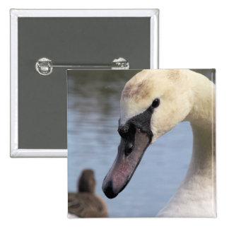 Cisne mudo joven pin cuadrado