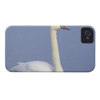 Cisne mudo, olor del Cygnus, adulto en niebla, iPhone 4 Case-Mate Carcasas