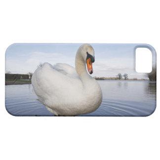 Cisne mudo (olor del Cygnus) en campo inundado, iPhone 5 Carcasas
