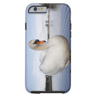 Cisne mudo (olor del Cygnus) en campo inundado, Funda De iPhone 6 Tough