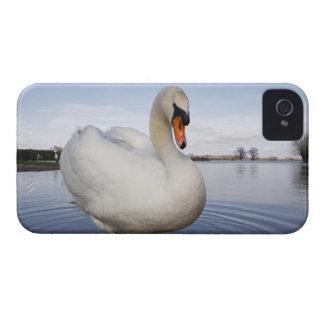 Cisne mudo (olor del Cygnus) en campo inundado, iPhone 4 Case-Mate Cobertura