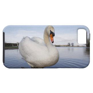 Cisne mudo (olor del Cygnus) en campo inundado, iPhone 5 Funda