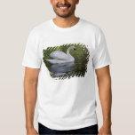 Cisne mudo (olor) del Cygnus Louisville, Kentucky Camisas