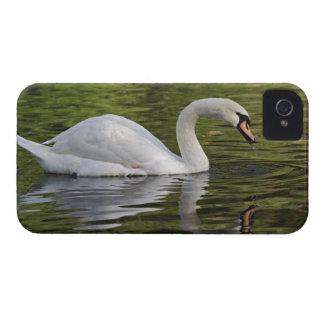 Cisne mudo (olor) del Cygnus Louisville, Kentucky iPhone 4 Case-Mate Cárcasa