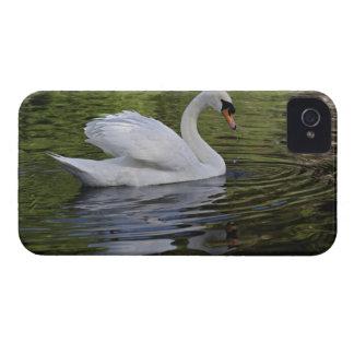 Cisne mudo (olor) del Cygnus Louisville, Kentucky iPhone 4 Protector