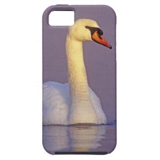 Cisne mudo, olor del Cygnus, varón, iPhone 5 Carcasas