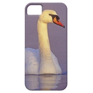 Cisne mudo, olor del Cygnus, varón, iPhone 5 Funda