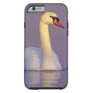 Cisne mudo, olor del Cygnus, varón, Funda De iPhone 6 Tough