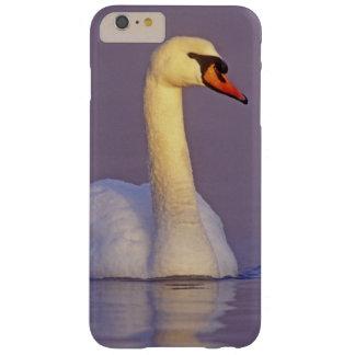 Cisne mudo, olor del Cygnus, varón, Funda Para iPhone 6 Plus Barely There