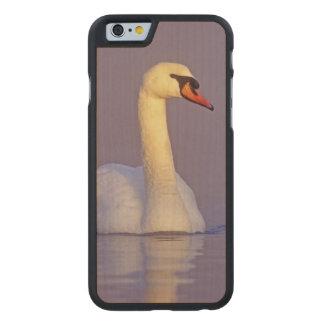 Cisne mudo, olor del Cygnus, varón, Funda De iPhone 6 Carved® De Arce