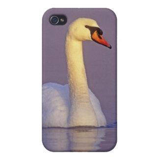 Cisne mudo, olor del Cygnus, varón, iPhone 4/4S Carcasas