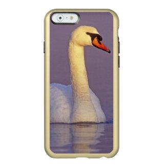 Cisne mudo, olor del Cygnus, varón, Funda Para iPhone 6 Plus Incipio Feather Shine
