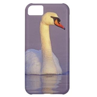Cisne mudo, olor del Cygnus, varón, Unterlunkhofen Funda Para iPhone 5C