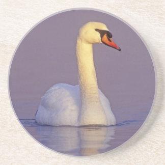 Cisne mudo, olor del Cygnus, varón, Unterlunkhofen Posavasos Diseño