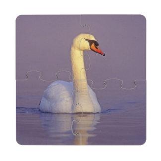 Cisne mudo, olor del Cygnus, varón, Unterlunkhofen Posavasos De Puzzle