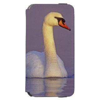 Cisne mudo, olor del Cygnus, varón, Funda Billetera Para iPhone 6 Watson
