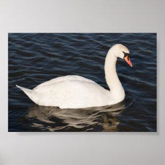 Cisne mudo póster