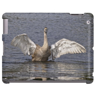 Cisne mudo Preening fauna Inglaterra