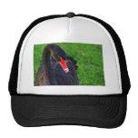 Cisne negro australiano gorros