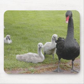 Cisne negro con sus jóvenes mouse pads