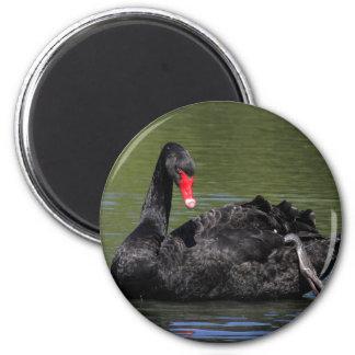 Cisne negro imán redondo 5 cm