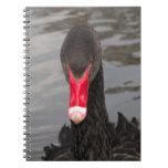 Cisne negro libro de apuntes