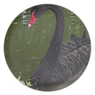 Cisne negro magnífico en el agua platos