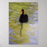 Cisne negro posters