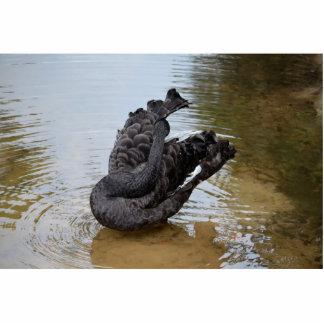 cisne negro preening en water.jpg fotoescultura vertical