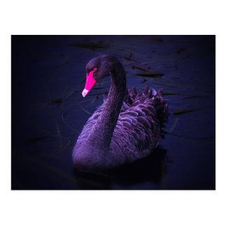 Cisne negro tarjetas postales