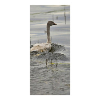 Cisne - no maduro lona personalizada