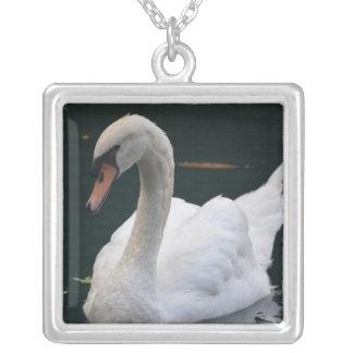 Cisne perfecto collar personalizado