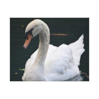 Cisne perfecto impresión en lona