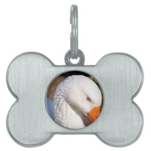 Cisne Placas Mascota