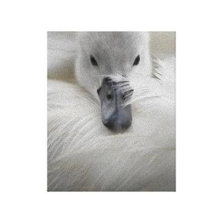Cisne, plumas blancas hermosas, comodidad de la be impresión en lona