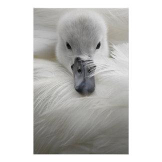 "Cisne, plumas blancas hermosas, comodidad de la folleto 5.5"" x 8.5"""