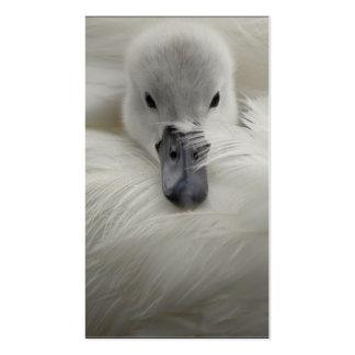 Cisne, plumas blancas hermosas, comodidad de la tarjetas de visita