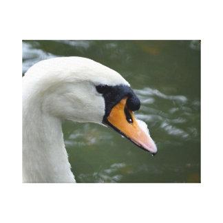 Cisne que mira imagen principal correcta del pájar impresiones de lienzo