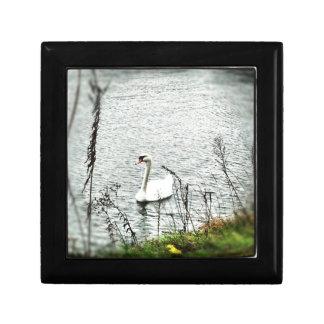 Cisne que monta hacia fuera el huracán Sandy. #San Caja De Joyas