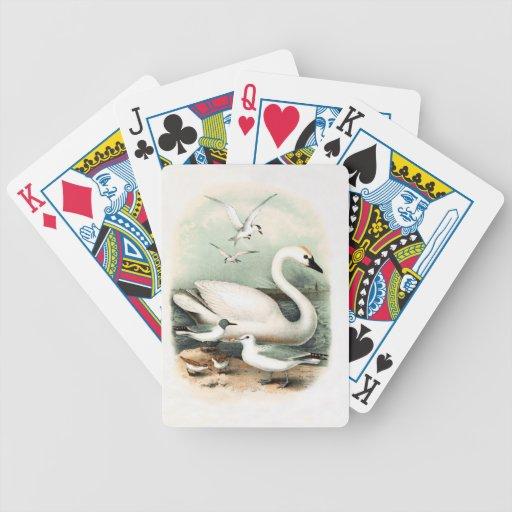 Cisne y gaviota barajas de cartas