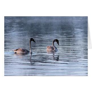 Cisnes adolescentes tarjeta pequeña
